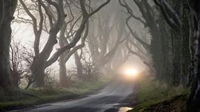 orman,sonbahar,sis,ağaç,yol