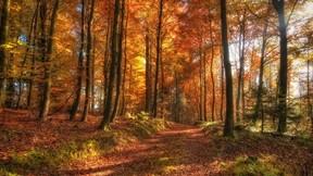 yol,orman,yaprak,güneş,ağaç