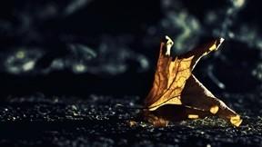 yaprak,sonbahar,kuru,güneş