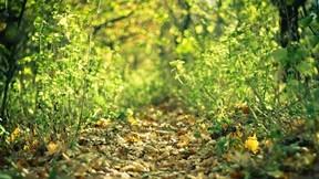 yol,patika,ot,yaprak,güneş,doğa