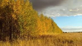 orman,sonbahar,ağaç,bitki,gökyüzü,bulut