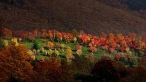 orman,sonbahar,ağaç,renkli