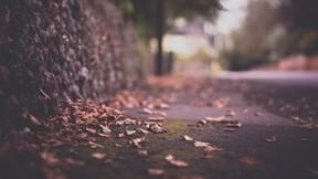 odak,sonbahar,kuru,yaprak