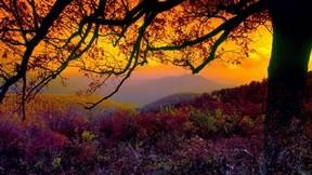 sonbahar,günbatımı,ağaç,bitki