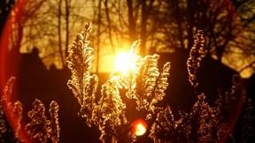 sonbahar,günbatımı,bitki,güneş,orman