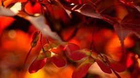 yaprak,güneş,sonbahar