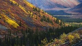orman,sonbahar,dağ,ağaç