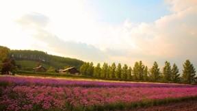 çiçek,orman,ev,doğa,tarla