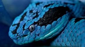 yılan,sürüngen,hayvan