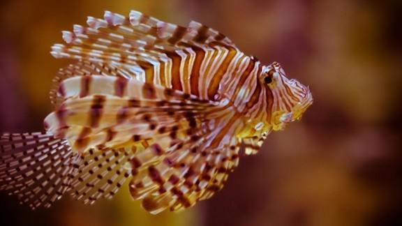 Renkli Balık