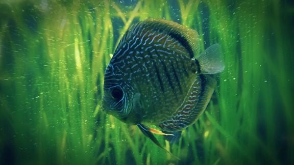Yalnız Balık