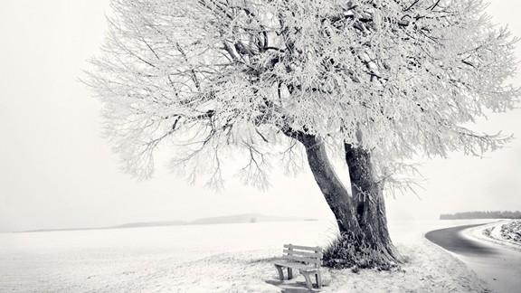 Ağaç Altında Bank