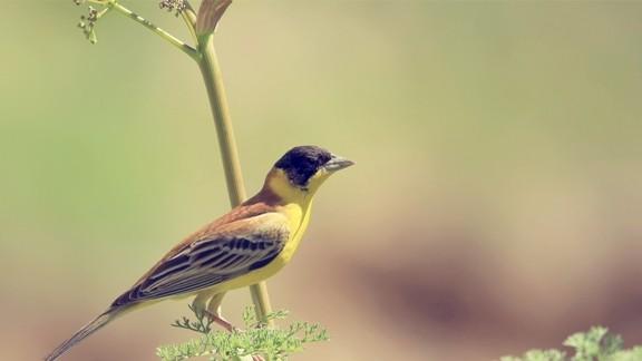 Dal Üstünde Kuş