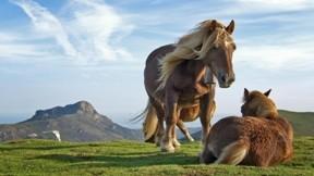 doğa,at,dağ,tay,gökyüzü,çimen