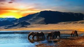at,göl,dağ,günbatımı