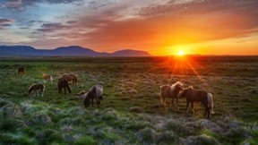 günbatımı,at,tay,doğa,göyüzü,güneş