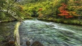 orman,nehir,dağ,doğa