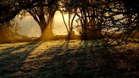günbatımı,orman,ağaç