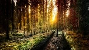 güneş,orman,doğa,ağaç
