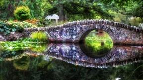 nilüfer,doğa,köprü,ağaç