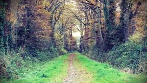 yol,doğa,ağaç,yaprak