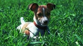 köpek,evcil,güneş,çimen