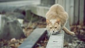 evcil,kedi
