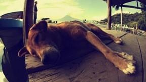 köpek,iskele,gökyüzü,doğa