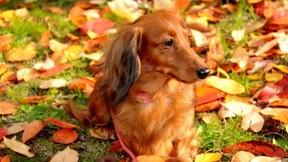 köpek,çimen,evcil,güneş