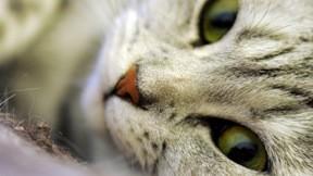 kedi,evcil,makro