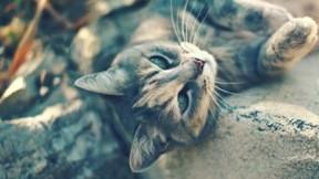 kedi,güneş,evcil