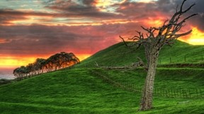 hdr,doğa,çimen,ağaç,gökyüzü
