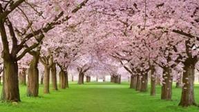 ilkbahar,ağaç,çimen,çiçek
