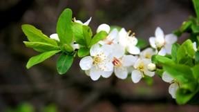 ilkbahar,çiçek,yaprak,makro