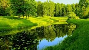 ilkbahar,doğa,manzara,ağaç,göl,çimen