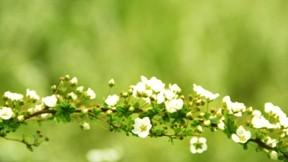 ilkbahar,çiçek,makro,dal,yaprak