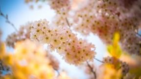 ilkbahar,çiçek,makro,güneş