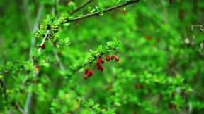 ilkbahar,meyve,yaprak