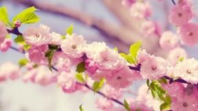 ilkbahar,çiçek,dal