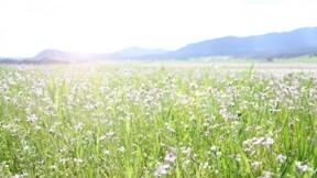 ilkbahar,doğa,güneş,çiçek