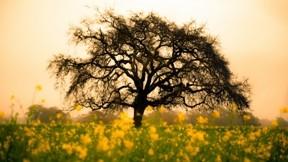 ilkbahar,günbatımı,ağaç,çiçek