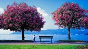 ilkbahar,deniz,güneş,ağaç,çimen
