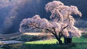 ilkbahar,ağaç,çiçek,güneş,doğa