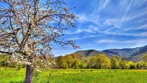 ilkbahar,ağaç,doğa,gökyüzü