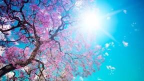 ilkbahar,güneş,ağaç,yaprak,gökyüzü