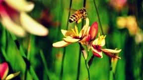 ilkbahar,çiçek,arı