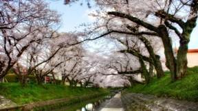 ilkbahar,ağaç,çiçek