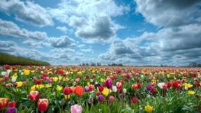 ilkbahar,lale,gökyüzü,bulut