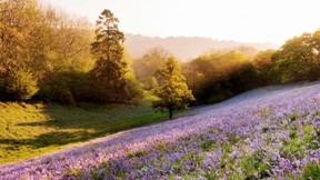 ilkbahar,doğa,çiçek,ağaç,orman