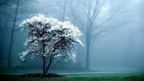 çiçek,ilkbahar,sis,ağaç,orman